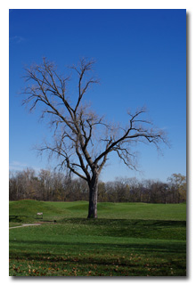 A barren tree amongst the mounds -- click to enlarge