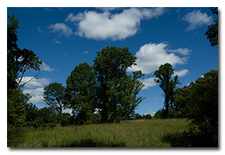 A view of the meadow -- click to enlarge